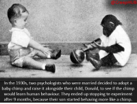 Creepy, Memes, and Creepypasta: In the 1930s, two psychologists who were married decided to adopt a  baby chimp and raise it alongside their child, Donald, to see if the chimp  would learn human behaviour. They ended up stopping te experiment  after 9 months, because their son started behaving more like a chimp Keep the comments civil.. • • • • CreepHUB • • • • • • • • • • • • • • • • • • • • • • • • • • • • • • • ----------------------------------------- -------------------- horrorstories horrorstory horrorfacts horrorfact creepypasta unknownfact horrorstories horrorstory horrorfacts horrorfact creepypasta unknownu horrifyingthing things scary scarystories creepystories creepy creepyfacts creepyfact scaryfacts scaryfact horrorstories horrorstory horrorfacts horrorfact creepypasta unknownfact horrorstories horrorstory horrorfacts horrorfact creepypasta unknownu horrifyingthing things conspiracy theories theory theoryconspiracy conspiracytheory conspiracytheories