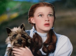 """Movie, Wizard of Oz, and Judy Garland: In the 1939 movie 'The Wizard of Oz' Dorothy, played by Judy Garland says """"Toto, I've a feeling we're not in Kansas anymore"""" - This is because they infact were not in Kansas anymore."""