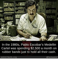 Cartelling: In the 1980s, Pablo Escobar's Medellin  Cartel was spending $2,500 a month on  rubber bands just to hold all their cash  weird-facts.org  @factsweird
