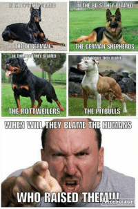 80s, Memes, and Doberman: IN THE 70S  IN THE 80'S THEY BLAMED  THE DOBERMAN  THE GERMAN SHEPHERDS  IN THE 0S THEY BLAMED  AND TODAY THEY BLAME  THE ROTTWEILERS  THE PITBULLS  WHEN WILL THEY BLAME THE HUMANS  WHO RAISED HEML!b  CCOLLAGE