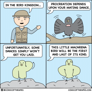 In the Bird Kingdom: In the Bird Kingdom