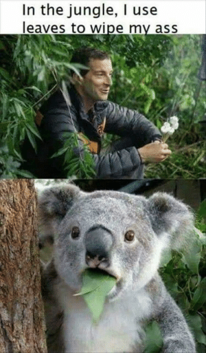 Ass, Funny, and Memes: In the jungle, I use  leaves to wipe my ass Funny Memes Of The Day 33 Pics