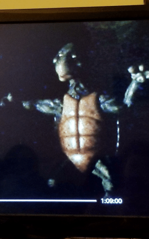 In the original TMNT movie, as Master Splinter describes the fighting turtles backstory to actress Judith Hoag, you can hear her actively throwing up in the background.: In the original TMNT movie, as Master Splinter describes the fighting turtles backstory to actress Judith Hoag, you can hear her actively throwing up in the background.