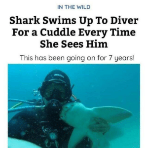 Just animals being bros: IN THE WILD  Shark Swims Up To Diver  For a Cuddle Every Time  She Sees Him  This has been going on for 7 years! Just animals being bros