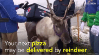 Memes, Domino's, and Dominoes: IN THE  Your next pizza  may be delivered by reindeer  DOMINO'S JAPAN Santa's (reindeer) helpers start a side-business:   delivering pizza in Japan!  Credit: http://www.dominos.jp/