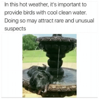v rare @animalsdoingthings [twitter: dickkingsmith]: In this hot weather, it's important to  provide birds with cool clean water.  Doing so may attract rare and unusual  suspects v rare @animalsdoingthings [twitter: dickkingsmith]