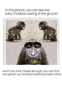 Monky: In this picture, you can see two  baby monkeys staring at the ground  and if you look closely enough, you can find  two grown up monkeys looking at each other.