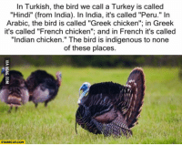 "Turkey: In Turkish, the bird we call a Turkey is called  ""Hindi"" (from India). In India, it's called ""Peru."" In  Arabic, the bird is called ""Greek chicken""; in Greek  it's called ""French chicken""; and in French it's called  ""Indian chicken."" The bird is indigenous to none  of these places.  STARECAT.COM"