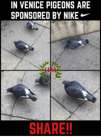 Memes, 🤖, and Venice: IN VENICE PIGEONS ARE  SPONSORED BY NIKE  SHARE! -REBUS