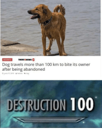 Hi doggy via /r/memes https://ift.tt/2qURXIT: INCIDENTSTHEREISNEWS  Dog travels more than 100 km to bite its owner  after being abandoned  junio 17, 2018  & Fabiola  dog  DESTRUCTION 100 Hi doggy via /r/memes https://ift.tt/2qURXIT