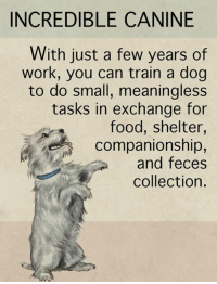 Food, Memes, and Work: INCREDIBLE CANINE  With just a few years of  work, you can train a dog  to do small, meaningless  tasks in exchange for  food, shelter,  companionship,  and feces  collection. Simply amazing.  What about canines impresses you?