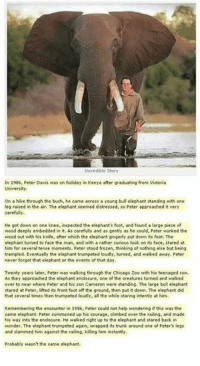 Beautiful :'): Incredible Story  In 1986, Peter Davis was on holiday in Kenya after graduating from Victoria  University.  on a hike through the bush, he came across a young bull elephant standing with one  leg raised in the air. The elephant seemed distressed, so Peter approached it very  carefully  He got down on one knee, inspected the elephant's foot, and found a large piece of  wood deeply embedded in it, As carefully and as gently as he could, Peter worked the  wood out with his knife, after which the elephant gingerly put down its foot. The  elephant turned to face the man, and with a rather curious look on its face, stared at  him for several tense monnents, Peter stood frozen, thinking of nothing else but being  trampled. Eventually the elephant trumpeted loudly, turned, and walked away. Peter  never forgot that elephant or the events of that day.  Twenty years later, Peter was walking through the Chicago Zoo with his teenaged son.  As they approached the elephant enclosure, one of the creatures turned and walked  over to near where Peter and his son Cameron were standing. The large bull elephant  stared at Peter, lifted its front foot off the ground, then put it down. The elephant did  that several times then trumpeted loudly, all the while staring intently at him.  Remembering the encounter in 1986, Peter could not help wondering if this was the  same elephant. Peter summoned up his courage, dimbed over the railing, and made  his way into the enclosure. He walked right up to the elephant and stared back in  wonder. The elephant trumpeted again, wrapped its trunk around one of Peter's legs  and slammed him against the railing, killing him instantly.  Probably wasn't the same elephant. Beautiful :')
