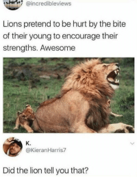 Lion: @incredibleviews  Lions pretend to be hurt by the bite  of their young to encourage their  strengths. Awesome  K.  @KieranHarris7  Did the lion tell you that?