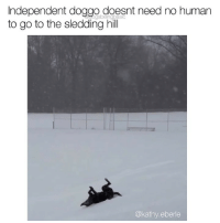 Laps on laps of sledding for the pupper. Via @kathy.eberle: Independent doggo doesnt need no humarn  to go to the sledding hill  @kathy.eberle Laps on laps of sledding for the pupper. Via @kathy.eberle