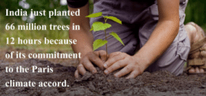 India, Paris, and Trees: India just planted  66 million trees in  12 hours because  of its commitment  to the Paris  , climate accord. Plant more trees