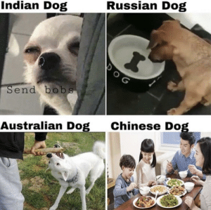 Love the chinese version: Indian Dog  Russian Dog  Send bobs  Australian Dog  Chinese Dog Love the chinese version