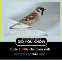 Children, Genius, and Indian: @indian fact genius  DID YOU KNOW  Only 1,990s children will  rememver this bird