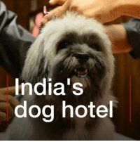 This is the Critterati in India, a luxury hotel… for dogs. For $70 a night your pooch can get a large velvet bed, TV and private dog flap leading to a balcony. There's even bacon ice-cream, pupcakes and Belgian beer on the menu. dogs cats pets animals hotel: India's  dog hote This is the Critterati in India, a luxury hotel… for dogs. For $70 a night your pooch can get a large velvet bed, TV and private dog flap leading to a balcony. There's even bacon ice-cream, pupcakes and Belgian beer on the menu. dogs cats pets animals hotel