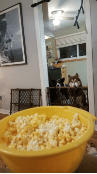 Popcorn, Delicious, and Indignant: Indignant Doggos Denied Popcorn