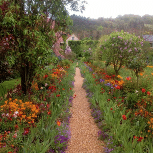 indigodreams: Monet's garden at Giverny: indigodreams: Monet's garden at Giverny