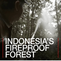 Memes, Lush, and Fireproof: INDONESIA'S  FIREPROOF  FOREST 13 MAR: During the huge peatland fires of 2015 in central Kalimantan, Indonesia, more than 800,000 hectares of forest was burnt. But one a small island of lush green trees was saved. This was the work of Januminro Bunsal, a native Dayak man. By carefully constructing wells lining the perimeter, doing social media fundraising and setting up a network of fire lookouts communicating via SMS, Januminro and his local community managed to save his home forest from the inferno surrounding it. This community-based project is poised to expand nationwide and help tackle the urgent problem of forest fire haze in South East Asia. Find out more: bbc.in-soicanbreathe Indonesia Kalimantan ForestFires Pollution AirPollution SoICanBreathe BBCShorts BBCNews @BBCNews