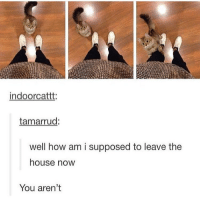 "Memes, Donuts, and 🤖: indoorcattt.  tamarrud:  well how am i supposed to leave the  house now  You aren't it's like ""pls donut go I am a smol cat and I need attention also most likely food don't go or else I will yell for a solid 10 minutes and piss off the neighbors but then ultimately stop and pass out on a bowl of my own food and then yell again when you come back pls don't go"" - Max textpost textposts"