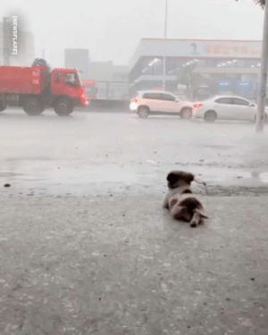 This little guy loves to sit out and watch the rain in peace 🐶🌧️: INEWSFLARE This little guy loves to sit out and watch the rain in peace 🐶🌧️