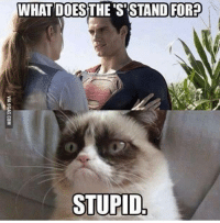 stupid: INHAT THE S STAND FORP  STUPID