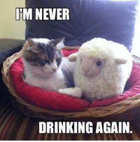I'm never drinking again.: INM NEVER  DRINKING AGAIN I'm never drinking again.