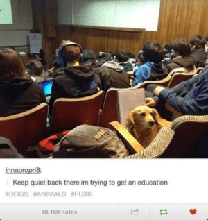 Animals, Dogs, and Omg: innapropri8:  Keep quiet back there im trying to get an education  #DOGS #ANİMALS #FUXK  48,160 notes He must be so PUPularomg-humor.tumblr.com
