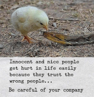 Nice People: Innocent and nice people  get hurt in life easily  because they trust the  wrong people...  Be careful of your company