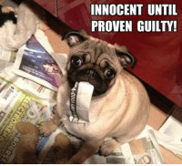 Memes, 🤖, and Innocent: INNOCENT UNTIL  PROVEN GUILTY!