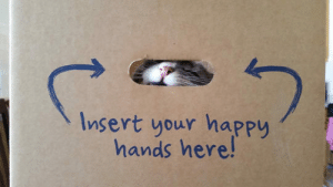 Trap, Tumblr, and Blog: Insert your happy  hands here! srsfunny:Kinda Looks Like A Trap