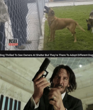 Dank, Memes, and Target: INSIDE  edition  Dog Thrilled To See Owners At Shelter But They're There To Adopt Different Dog This put a hole in my heart by scruffydolphin MORE MEMES