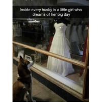 Memes, Husky, and 🤖: Inside every husky is a little girl who  dreams of her big day *waits 70 (dog) years* (Rp @hilarious.ted)
