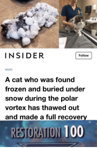 Anaconda, Frozen, and Memes: INSIDER  Follow  NEWS  A cat who was found  frozen and buried under  snow during the polar  vortex has thawed out  and made a full recover  RESTORATION 100 positive-memes:  He made it :,)