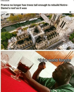 https://www.instagram.com/p/Bwe7P3WBDU6/?utm_source=ig_tumblr_shareigshid=6uvna25q3eyx: INSIDER  France no longer has trees tall enough to rebuild Notre  Dame's roof as it was  0  Ashley Colman  sthind world forests https://www.instagram.com/p/Bwe7P3WBDU6/?utm_source=ig_tumblr_shareigshid=6uvna25q3eyx