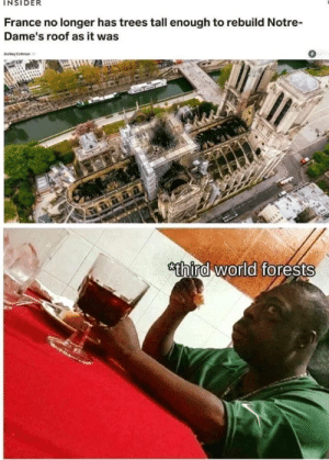 maybeiamfireproof: : INSIDER  France no longer has trees tall enough to rebuild Notre-  Dame's roof as it was  0  thira world forests maybeiamfireproof: