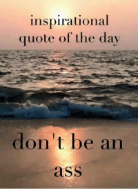 inspirational quote: inspirational  quote of the day  don't be an  ass