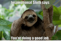 if you can believe  you can achieve: Inspirational Sloth says  You're doing a good job. if you can believe  you can achieve