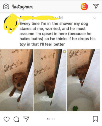"""Helpful doggo: Instagam  1d  Every time I'm in the shower my dog  stares at me, worried, and he must  assume lI'm upset in here (because he  hates baths) so he thinks if he drops his  toy in that I'll feel better  yaV"""" Helpful doggo"""