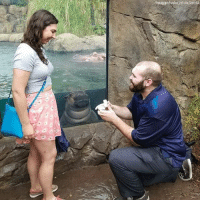 Instagram, Marriage, and Memes: Instagram/hayley roll va Storyl One couple had a special guest front and center at their marriage proposal at the Cincinnati Zoo, Fiona the Hippo!