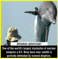 "The largest stockpile of nuclear weapons in the United States, and possibly even in the world, is defended by a group of militarized dolphins. Since 2010, the U.S. Navy has employed the animals to protect the Naval Base Kitsap, which is located on the Kitsap Peninsula in Washington about 20 miles outside Seattle. Prior to 2010, unwanted swimmers around this base were identified by trained sea lions. Though military dolphins are used for finding mines in other parts of the world, the Kitsap dolphins are on the lookout for intruders. Once a dolphin finds an unwanted swimmer, the dolphin swims back to its trainers, who might give it a transponder to mark the swimmer's location. Or, they may equip the dolphins with a shackle that will attach to the intruder and send a float to the surface as a signal to Naval officers. . Comment ""DOLPHIN"" letter by letter for a story shout-out.: INSTAGRAM 