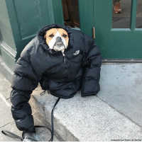 "Wallace the bulldog is bundled up and prepared for the ""bomb cyclone"" winter storm system that is slamming the East Coast. Visit FoxNews.com for more on this storm.: Instagram/Joe Thistle via Storyful Wallace the bulldog is bundled up and prepared for the ""bomb cyclone"" winter storm system that is slamming the East Coast. Visit FoxNews.com for more on this storm."