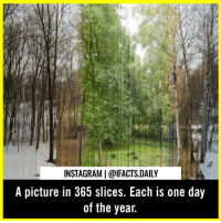 Friends, Instagram, and Memes: INSTAGRAM | @lFACTS.DAILY  A picture in 365 slices. Each is one day  of the year. Wow! Amazing! Tag your friends.