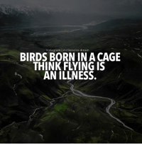 Instagram, Memes, and Birds: Instagram millionaire.dream  BIRDS BORN IN A CAGE  THINK FLYING IS  AN ILLNESS. You are born to soak. Never let anyone take that away from you.