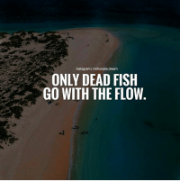 Don't just go with the flow... Create your own flow!: Instagram | millionaire.dream  ONLY DEAD FISH  GO WITH THE FLOW Don't just go with the flow... Create your own flow!