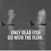 Don't go with the flow.... thefutureentrepreneur: INSTAGRAM | THE-FUTURE. ENTREPRENEUR  ONLY DEAD FISH  GO WITH THE FLOW Don't go with the flow.... thefutureentrepreneur