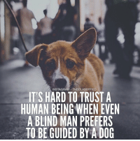 Love this powerful message from @theclassyfied. Be careful who you trust! Make sure to follow them for more motivation! 👉@theclassyfied👈 👉@theclassyfied👈: INSTAGRAM THECLASSYFIED  IT'S HARD TO TRUST A  HUMAN BEING WHENEVEN  A BLIND MAN PREFERS  TO BE GUIDED BY A DOG Love this powerful message from @theclassyfied. Be careful who you trust! Make sure to follow them for more motivation! 👉@theclassyfied👈 👉@theclassyfied👈