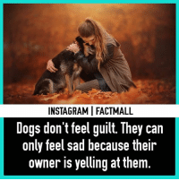 ❤Aww: INSTAGRAMI FACTMALL  Dogs don't feel guilt. They can  only feel sad because their  owner is yelling at them ❤Aww